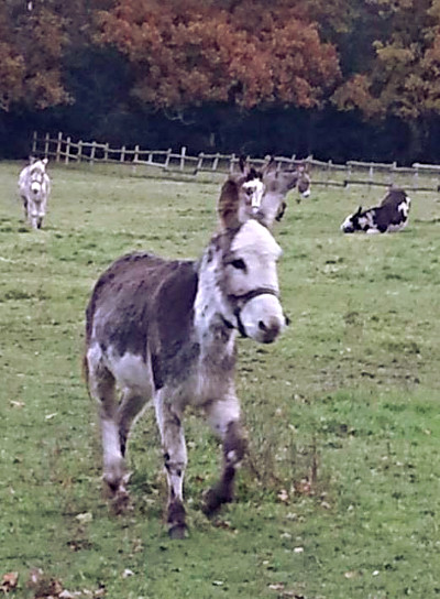 about our donkeys