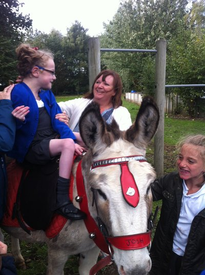 donkeys for therapy