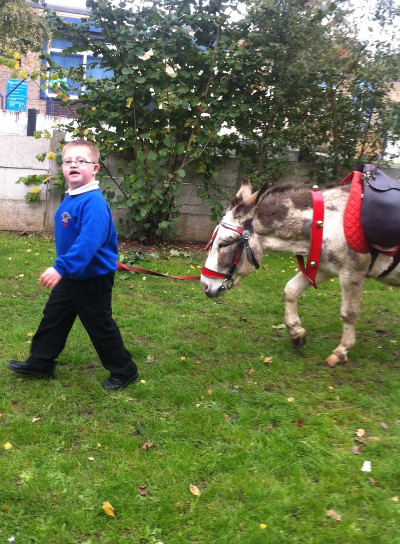 donkeys at special needs schools